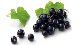 Blackcurrant (17)